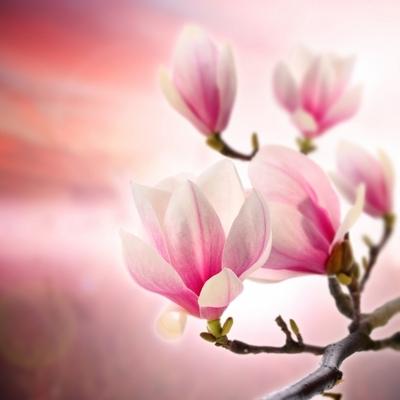 Images : Le printemps