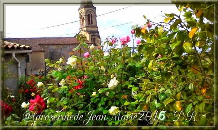 ma Roseraie ,la santé des rosiers ,des nouveautés