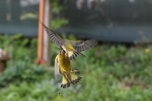 Jeux d'oiseaux