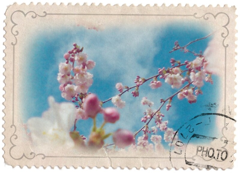 Le printemps d hier entre deux averses