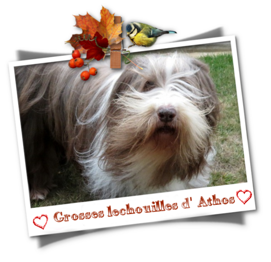 2019 * Athos - photos automne