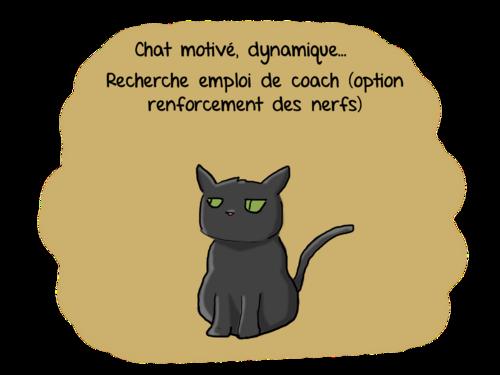 Curriculum vitae d'un chat.