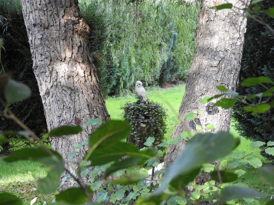L'image contient peut-être: plante, arbre, plein air et nature