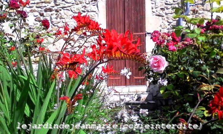 mon jardin,beaucoup de travail mais une belle récompense