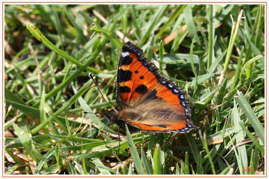Insectes-03-2913.jpg