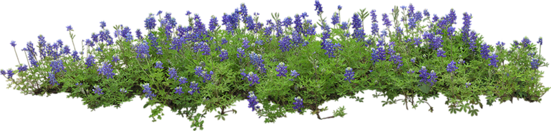 Flowers in the Garden 35.png