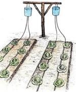 Astuce jardin BIO