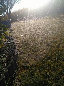 Ce matin dans mon jardin,