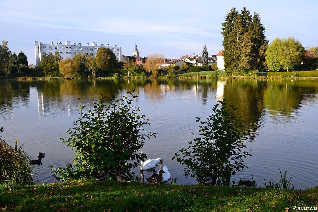 Étang de la Poche - Luxeuil-les-Bains - (70)