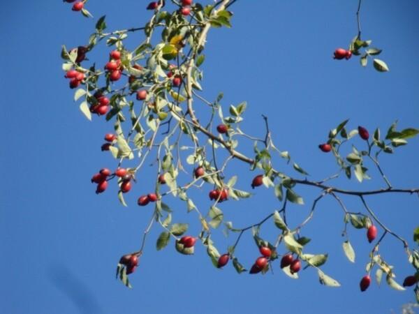 automne-copie-1.jpg