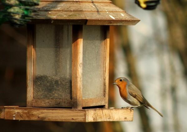 Oiseaux de mon jardin durant l'hiver 2014-2015
