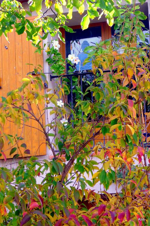 Vivent les couleurs de l'automne !