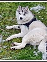 Ourka (14 mois, en mue)
