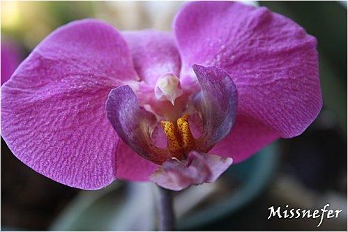 fleurs-004.JPG