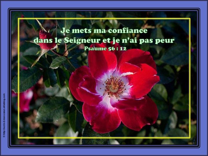 Je mets ma confiance dans le Seigneur - Psaumes 56 : 12