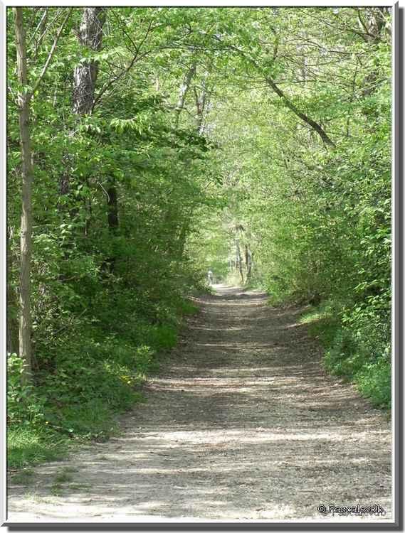 Bois du Burck