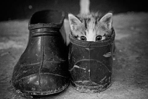 12 - La beauté du chat