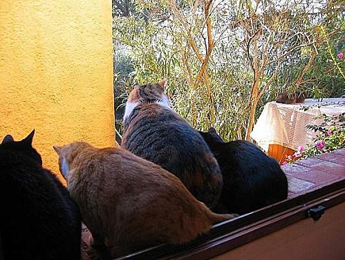 chats du maquis