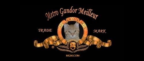 GANDOR, le petit dernier....