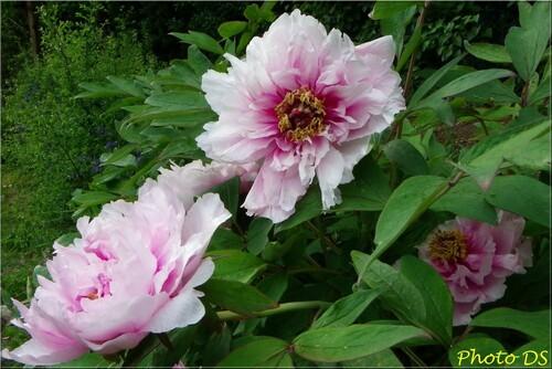 Photos de fleurs, par D.S.....