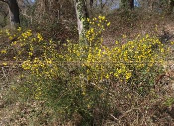 ForêtLandaise30Mars2012 (3)