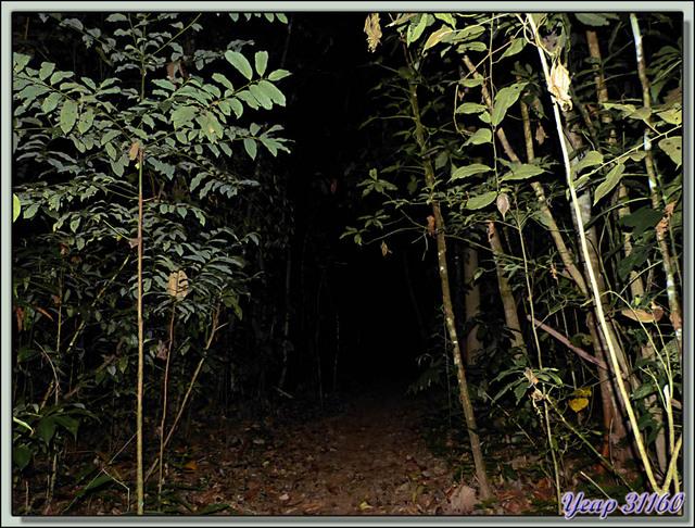 Blog de images-du-pays-des-ours : Images du Pays des Ours (et d'ailleurs ...), La nuit est complètement tombée sur la forêt - La Palma - Puerto Jiménez - Costa Rica