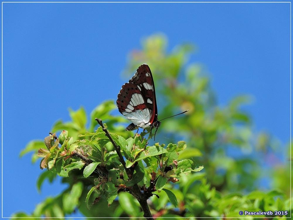 Printemps 2015 à la réserve ornitho du Teich - 13/13