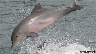 Lorsqu'un dauphin rencontre un autre dauphin ...