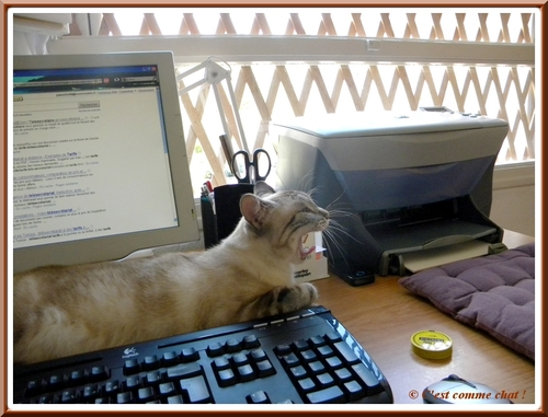 Entre clavier et écran
