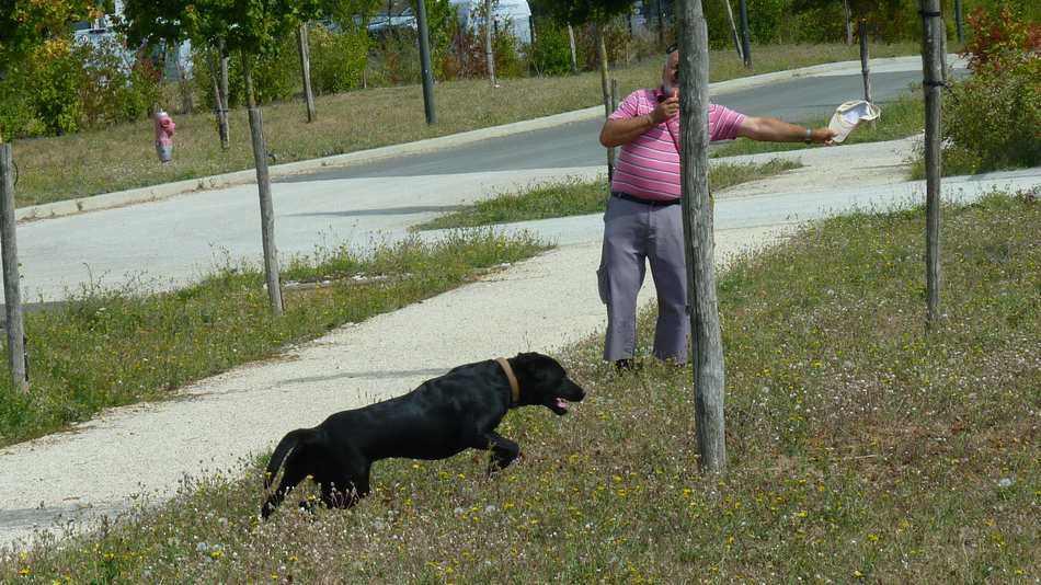 La connexion avec son chien.
