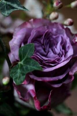 Rivière de roses