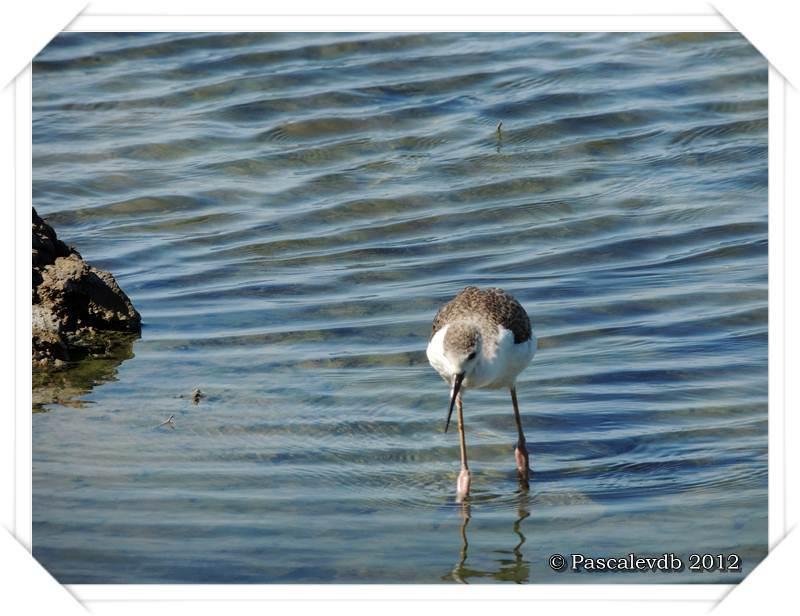 Visite aux oiseaux du Teich - 6/12