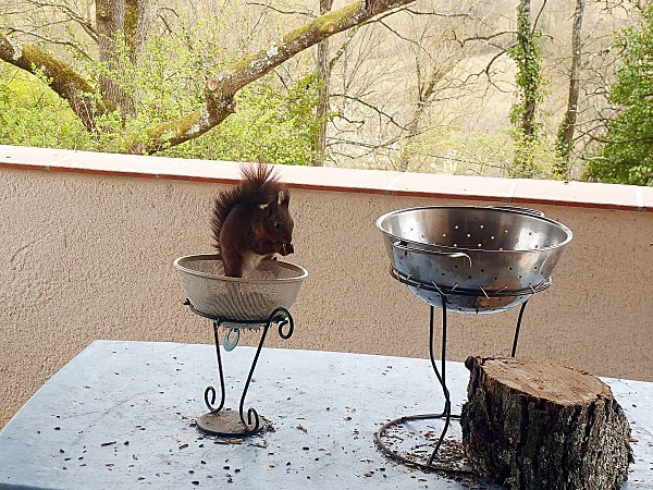 Ecureuil-2011-03-19-05