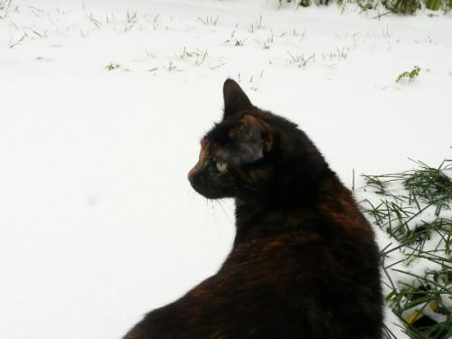 neige-chats_02.JPG