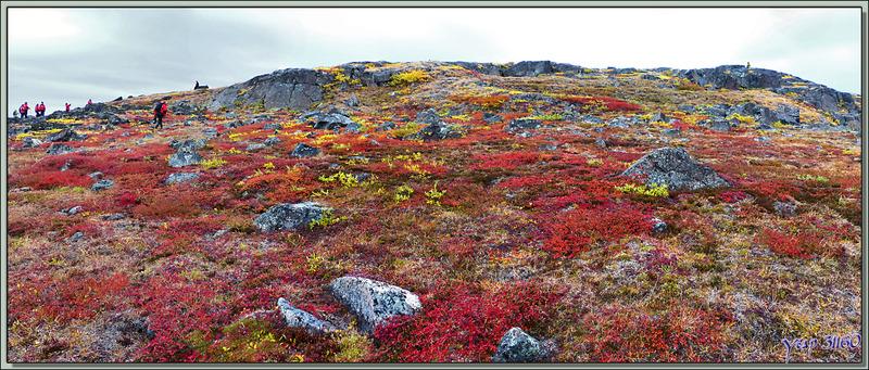 Vue panoramique sur la toundra et les falaises d'Edinburgh Island - Nunavut - Canada