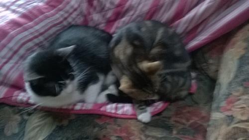 mes petits chats