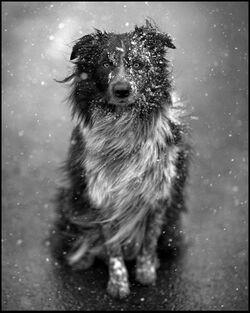 Le sel de déneigement : produit toxique pour les chiens et les chats