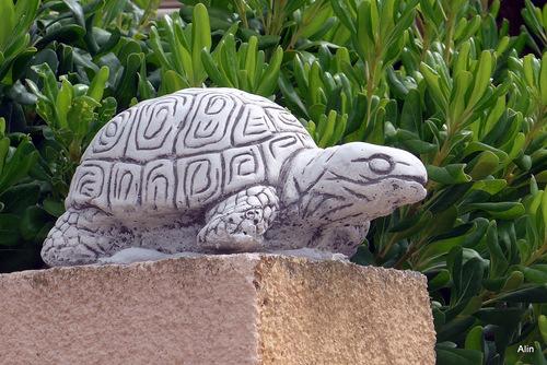 Chien ou tortue ?