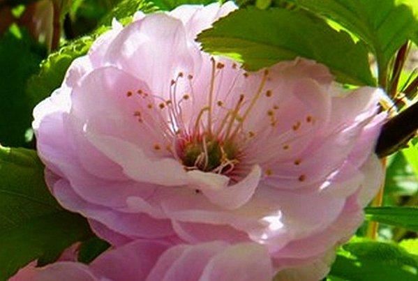 fleur-rose-macro.jpg