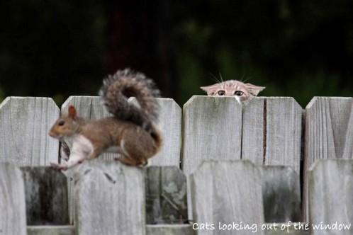 chat-ecureuil.jpg