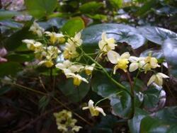 Jardin fleuri en hiver