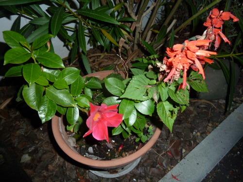 La nuit, les fleurs sont belles aussi !