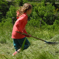 transport d'herbes fraîches