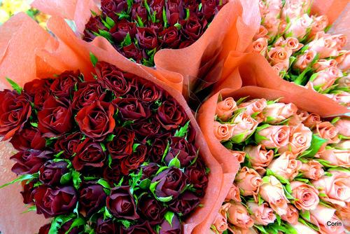 Des bouquets de roses et un porte en fer ...