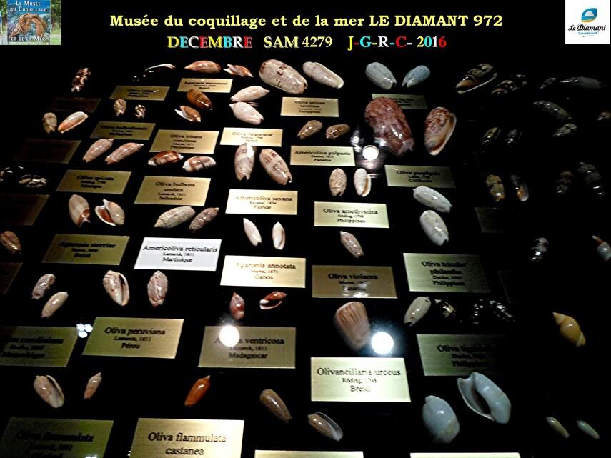 Le monde des coquillages de mer   3/5  23/29   LE DIAMANT MARTINIQUE       D    23/10/2018