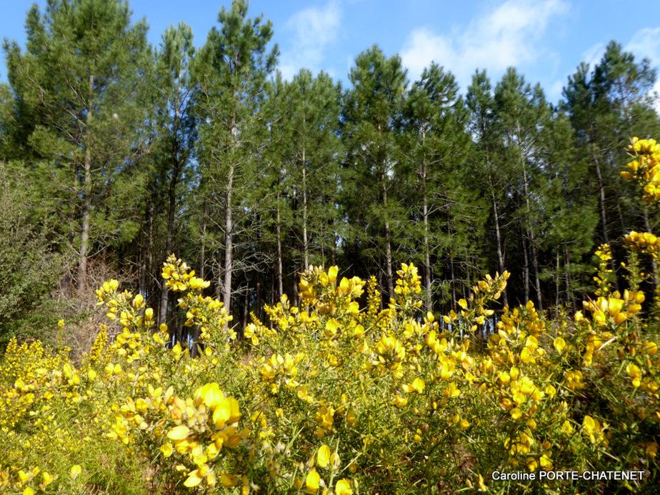 *Fleurs jaunes...*