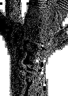 arbre filigrane