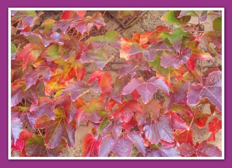 partage photos novembre