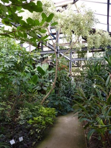 Serre des arbustes tropicaux 2