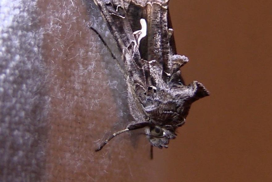 Insectes: cabinet de curiosité